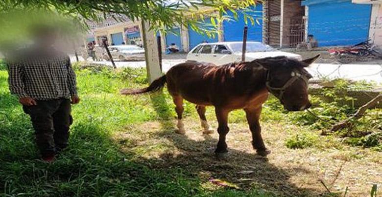 horse in quarantine