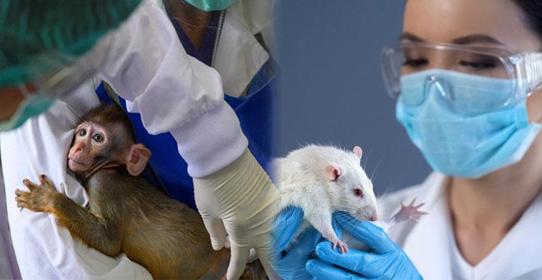 बंदर-खरगोश पर टेस्ट हुआ सफल, अब इंसान की बारी