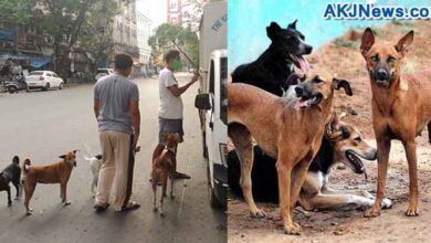Some people came forward to help the stray dogs