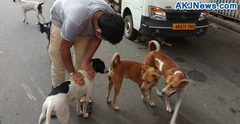 some people are helping stray dogs in lockdown