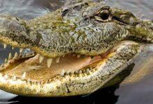 crocodile-seen-in-madhyapradesh